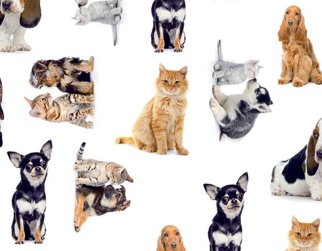 Cats and Dogs white fabric little johnny